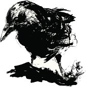 Vector illustration of black crow