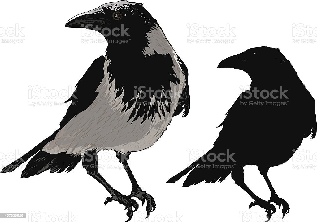 Black Crows royalty-free black crows stock vector art & more images of aircraft wing