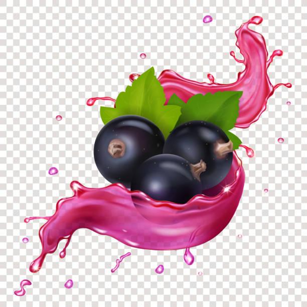 Black currant juice splash berries vector realistic illustration Black currant juice splash berries vector realistic illustration black currant stock illustrations