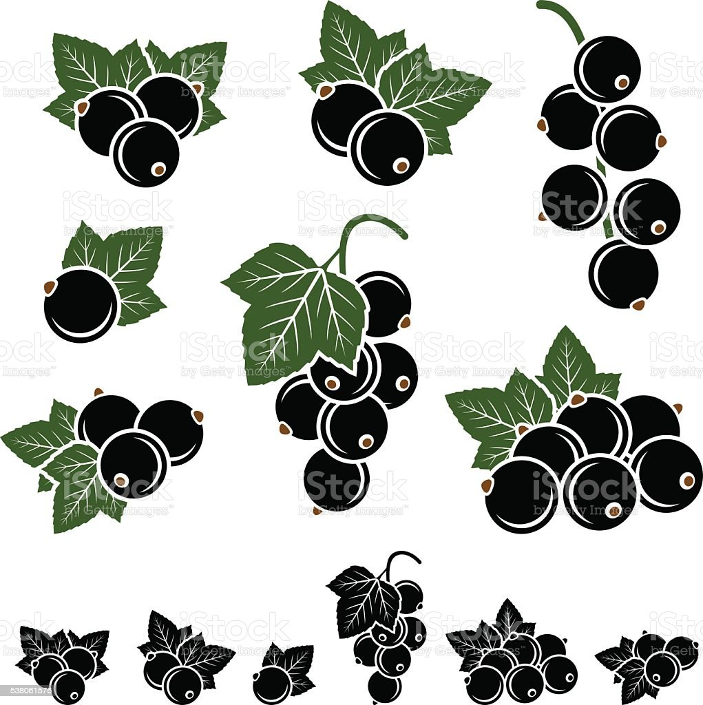 Black currant set. Vector vector art illustration
