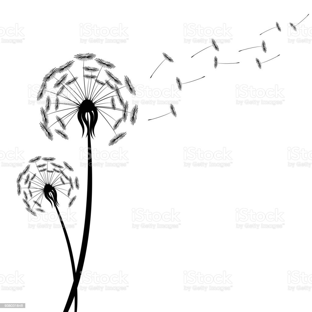 Black Dandelion Silhouette With Wind Blowing Flying Seeds Isolated