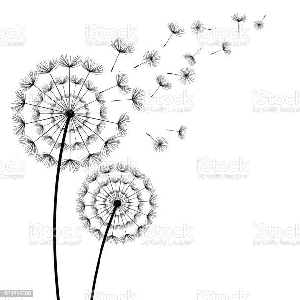 Black dandelions with flying fluff on white background vector id824816006?b=1&k=6&m=824816006&s=612x612&h=mwiw0yafsz5hhcqc1 dfgodan7wayxskdsurriq8r0s=