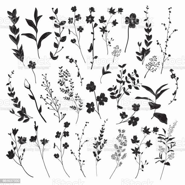 Black drawn herbs plants and flowers vector illustration vector id664637330?b=1&k=6&m=664637330&s=612x612&h=yc7he1uhwaozbw hka0dsdnyaedlhlk79gpo8qyzy a=