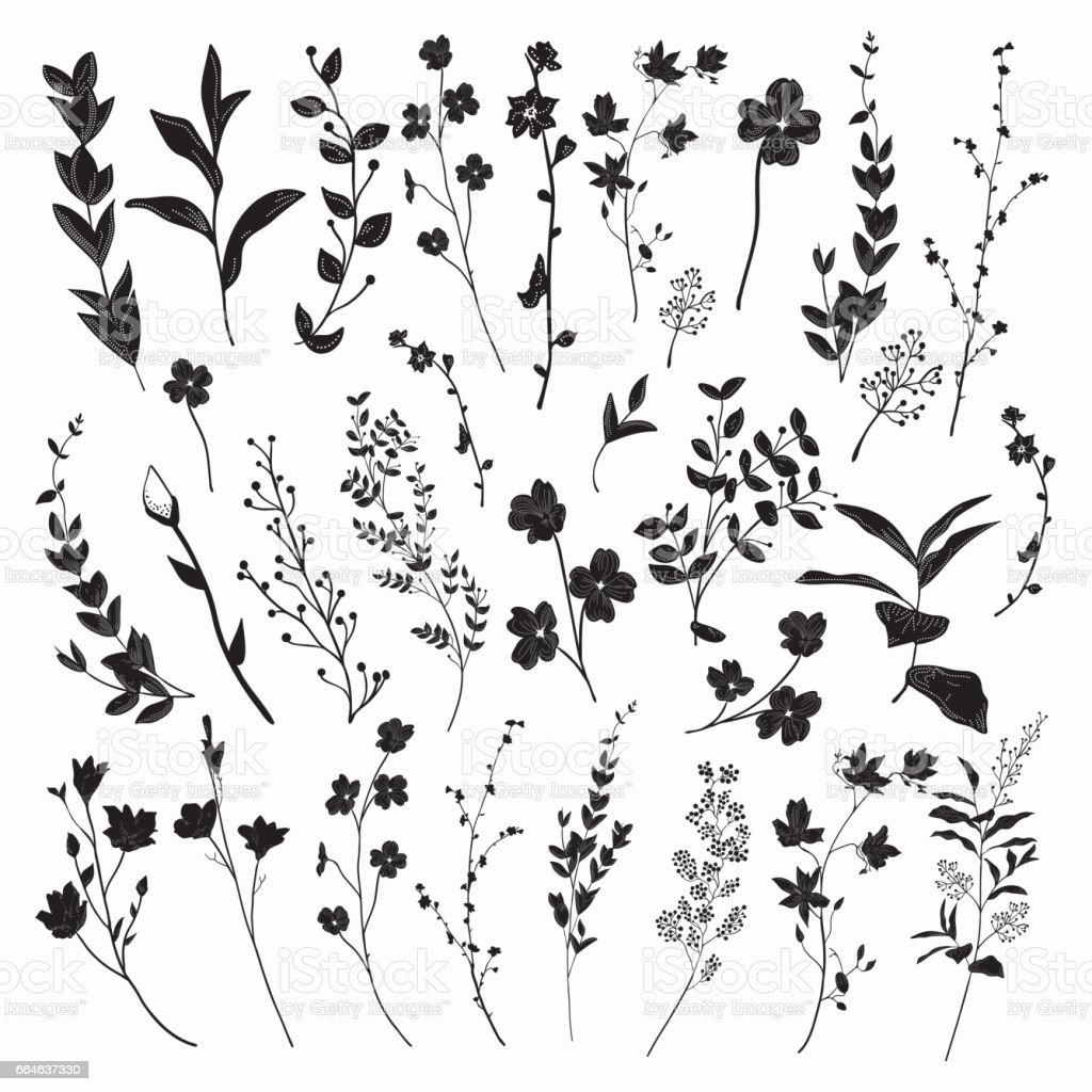 Schwarz gezeichnete Kräuter, Pflanzen und Blumen. Vektor-Illustration – Vektorgrafik