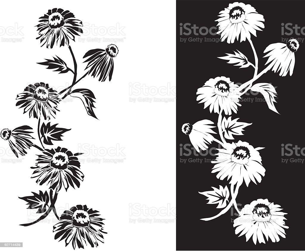 Black Echinacea vector art illustration
