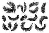 Black feathers. Realistic fluffy swan feathers, vintage isolated quill silhouettes, vector angel or bird twirled feathers on white background. Decorative detailing ink hand drawn silhouette birds