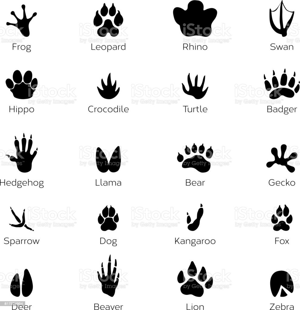 Black footprints shapes of animals. Elephant, leopard, reptile and tiger. Different steps vector art illustration
