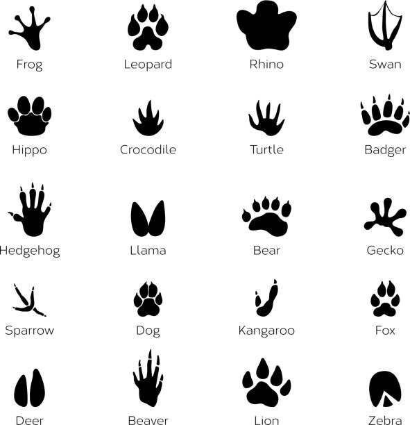 black footprints shapes of animals. elephant, leopard, reptile and tiger. different steps - gecko stock illustrations, clip art, cartoons, & icons