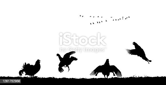 Black grouse cocks jump in field. Vector silhouette