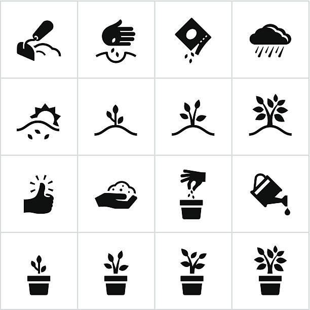 ilustrações de stock, clip art, desenhos animados e ícones de preto processo de crescimento ícones - plantar