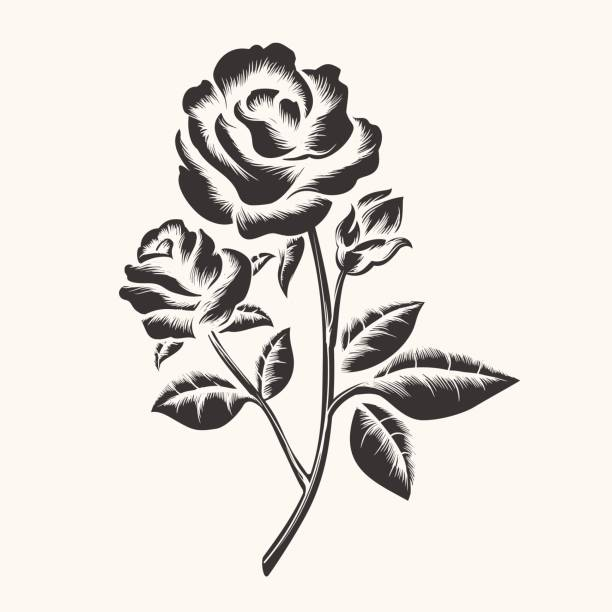 Top 60 Rose Bud Tattoo Designs Clip Art Vector Graphics And