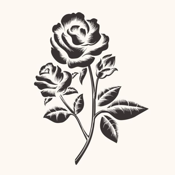 ilustraciones, imágenes clip art, dibujos animados e iconos de stock de rosas negra dibujado a mano grabado - tatuajes de flores