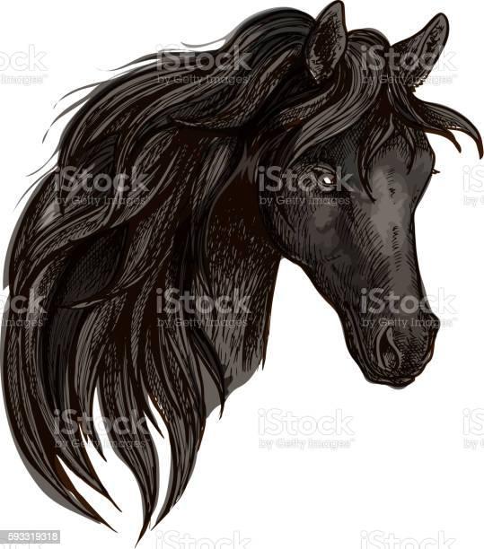 Black horse head watercolor portrait vector id593319318?b=1&k=6&m=593319318&s=612x612&h=vuoetmadzdtglxsrzm5gjksar9rnk536b8akh1n5yue=