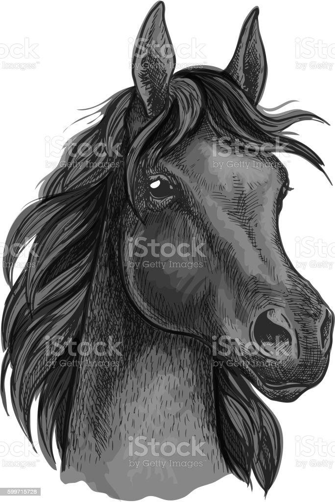 Black Horse Portrait With Shiny Dark Eyes Stock Illustration Download Image Now Istock