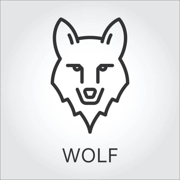 Royalty free wolf face clip art vector images illustrations istock - Dessin de loup simple ...