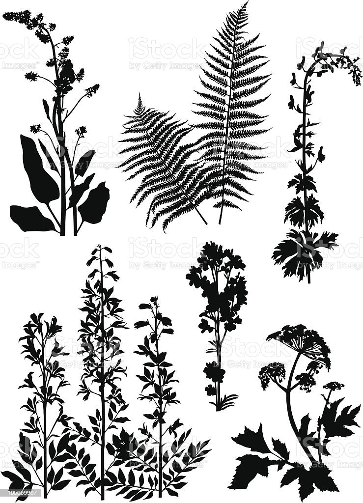 Black illustrations of mountain plants on a white background royalty-free black illustrations of mountain plants on a white background stock vector art & more images of astrantia
