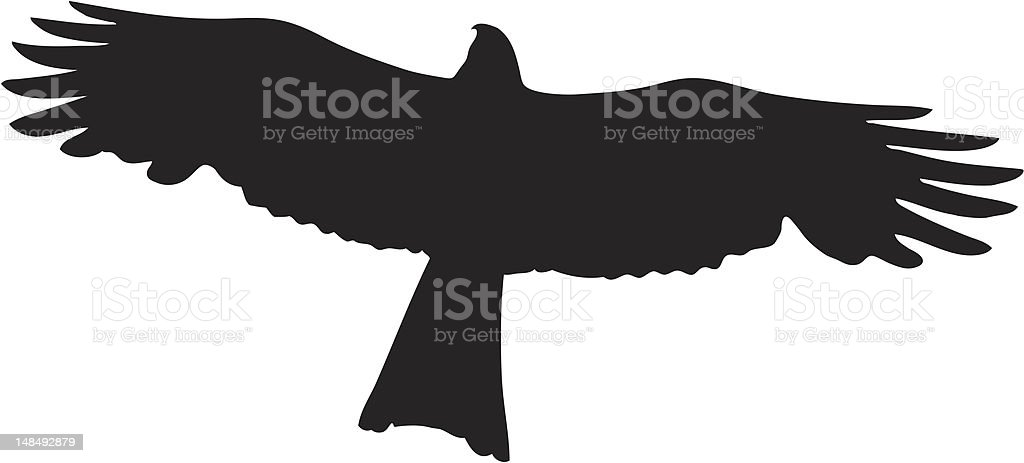Black image of a large bird of prey on a white background vector art illustration