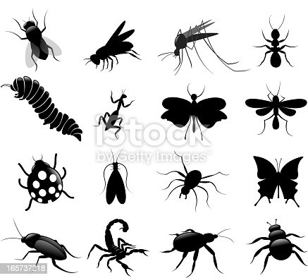 drawing of vector black insect collection.
