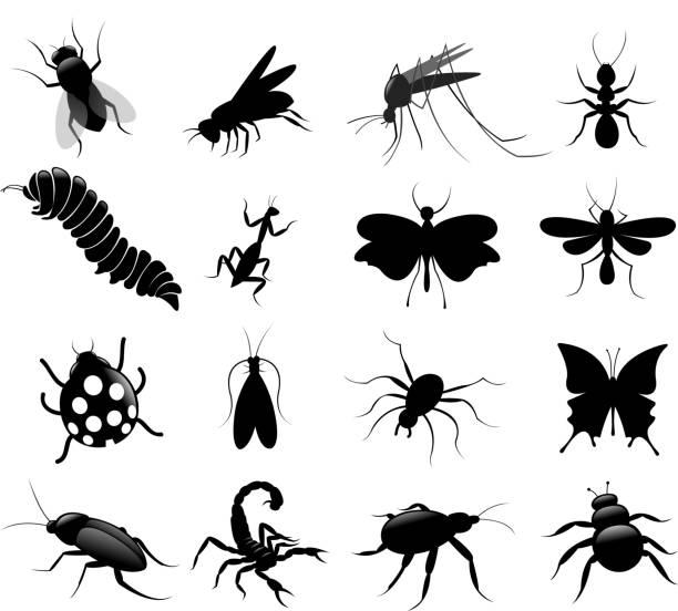 블랙 곤충 설정 - 곤충 실루엣 stock illustrations