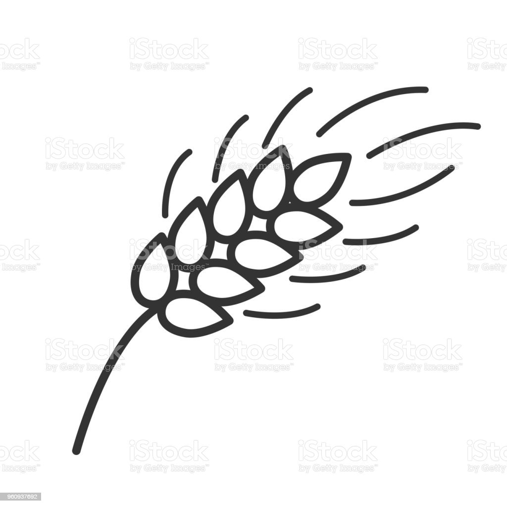 black isolated outline icon of ear of wheat on white background line