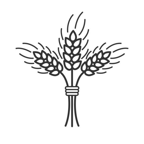 demet buğday beyaz arka planda siyah izole anahat simgesi. buğday demet satırı simgesi. - buğday stock illustrations