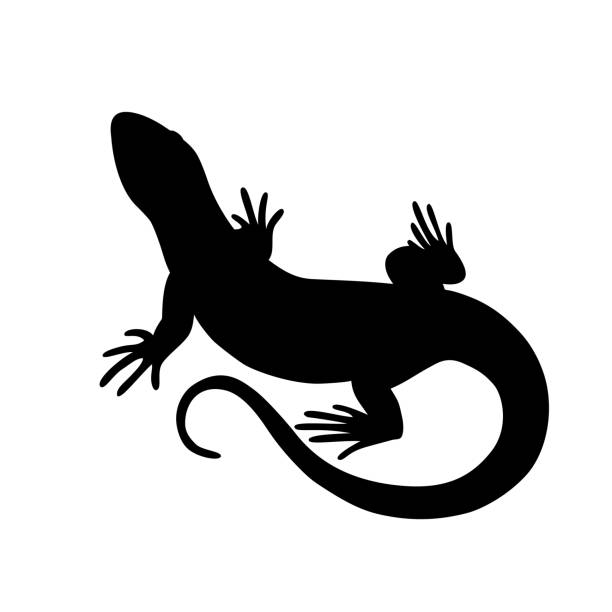 black isolated silhouette of lizard on white background. - reptiles stock illustrations