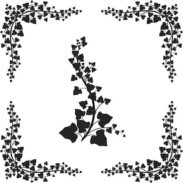 stockillustraties, clipart, cartoons en iconen met black ivy vine silhouette - klimop