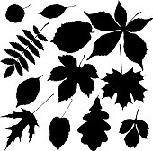 black leaves