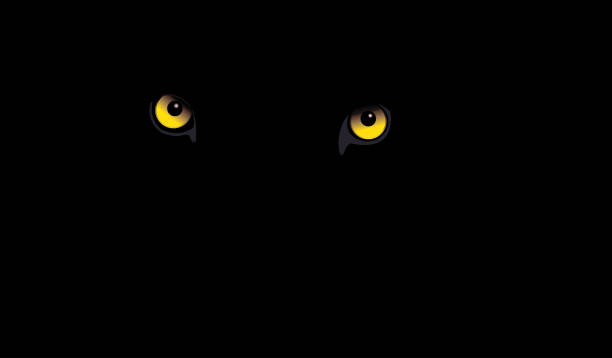 Black Leopard eyes Black Leopard eyes Vector illustration. animal eye stock illustrations