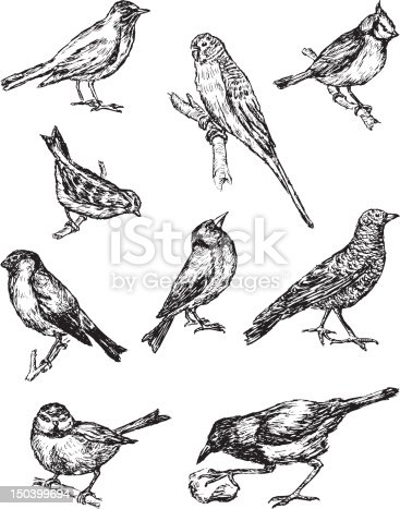 The vector drawings of a different birds in style of a sketch.