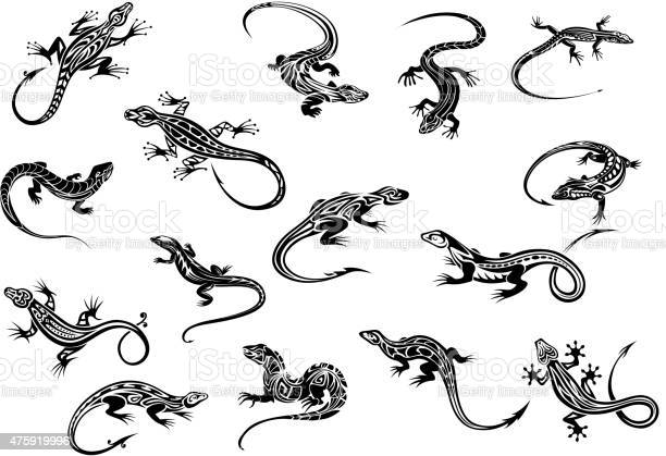 Free lizzard Images, Pictures, and Royalty-Free Stock