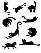 Black lovely cats