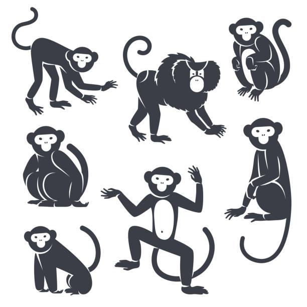 black monkeys silhouettes isolated on white. - monkey stock illustrations