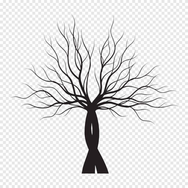Top 60 Underground Tree Roots Clip Art Vector Graphics And