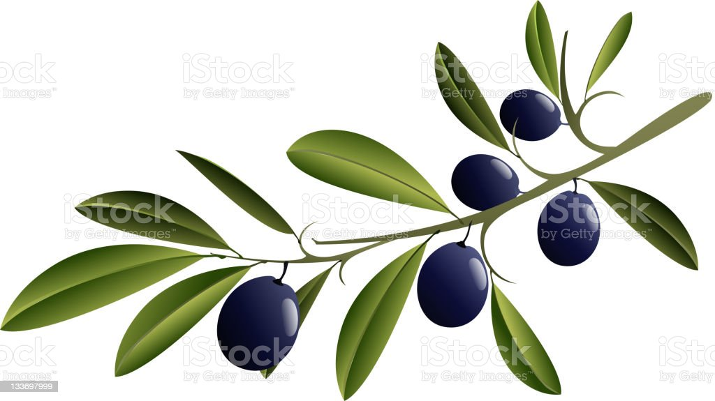 Black Olive Branch royalty-free stock vector art