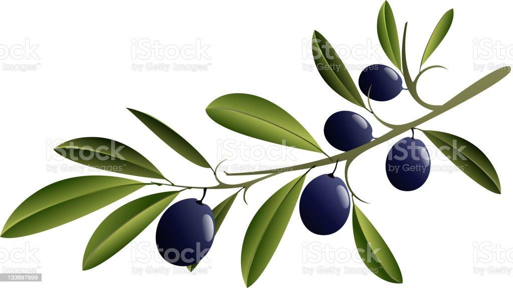 Black Olive Branch vector art illustration