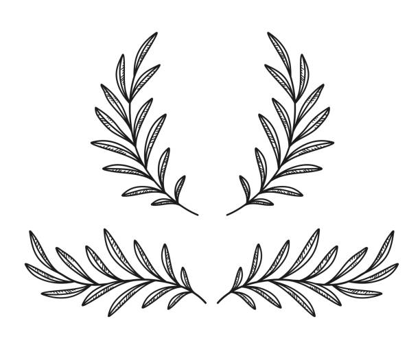 black olive branches and wreath black olive branches wreath, laurel divider with leaves olives stock illustrations