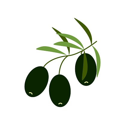 Black olives on a branch, healthy food, vector clipart in flat style, isolate on white