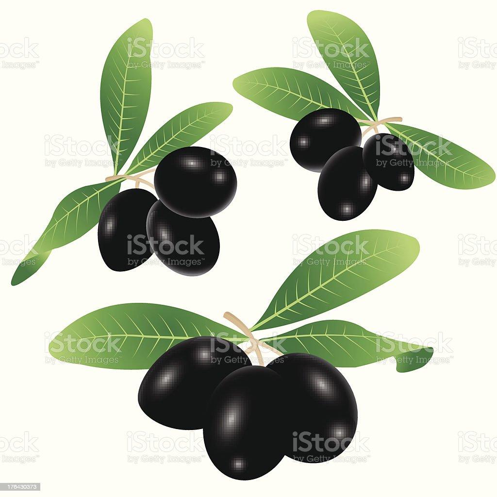 Black olives vector art illustration
