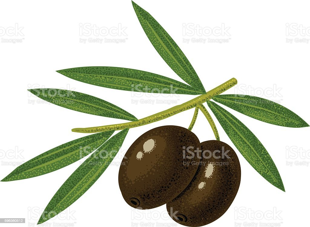 Black olives royalty-free black olives stock vector art & more images of agriculture