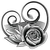 Black ornamental rose