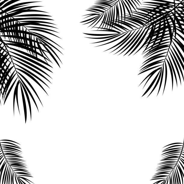 ilustrações, clipart, desenhos animados e ícones de black folha de palmeira no fundo branco. ilustração vetorial. - coqueiro