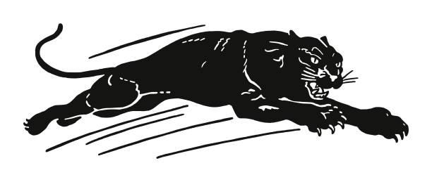 black panther - jaguar stock illustrations