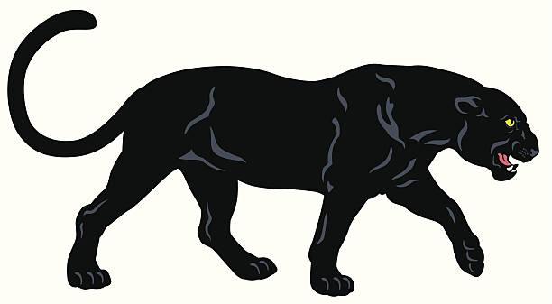 Panthere Noire Vectoriels Et Illustrations Libres De Droits Istock