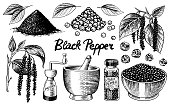 Black pepper set in Vintage style. Mortar and pestle, Allspice or peppercorn, Mill and dried seeds, a bunch of spices. Herbal seasoning for cooking Engraved hand drawn vector sketch for background