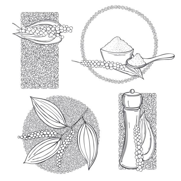 ilustrações de stock, clip art, desenhos animados e ícones de black pepper. vector  illustration. - natureza close up