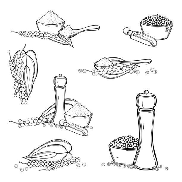 ilustrações de stock, clip art, desenhos animados e ícones de black pepper. vector sketch  illustration. - natureza close up