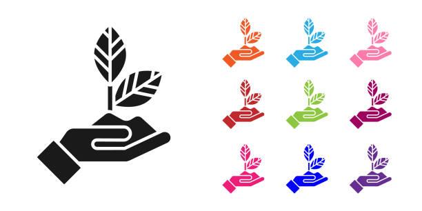 schwarze pflanze in der hand der umweltschutz-ikone isoliert auf weißem hintergrund. samen und sämling. pflanzung sapling. ökologie-konzept. setzen sie symbole bunt. vektor-illustration - menschliches körperteil stock-grafiken, -clipart, -cartoons und -symbole