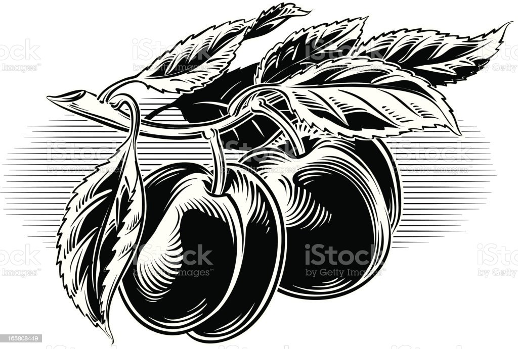 black plums on a branch royalty-free stock vector art