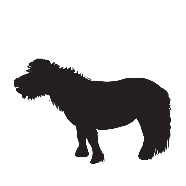 black pony silhouette - pony stock illustrations